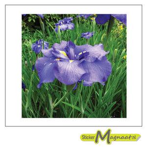 Tegelsticker paarse bloem foto